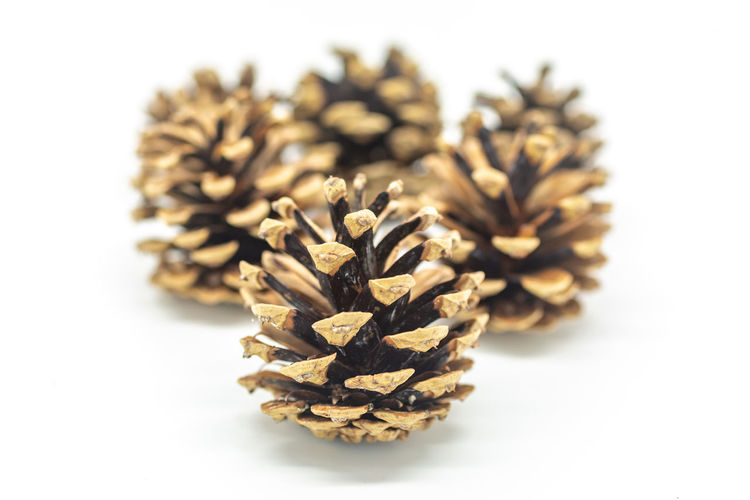 A group of pine cones, with a shallow depth of field Christmas Shallow Depth Of Field Brown Close-up Cone Coniferous Tree Cut Out Decoration Dry Flower Focus On Foreground Food Food And Drink Freshness Heap Indoors  Natural Pattern Nature No People Pinaceae Pine Cone Plant Still Life Studio Shot White Background