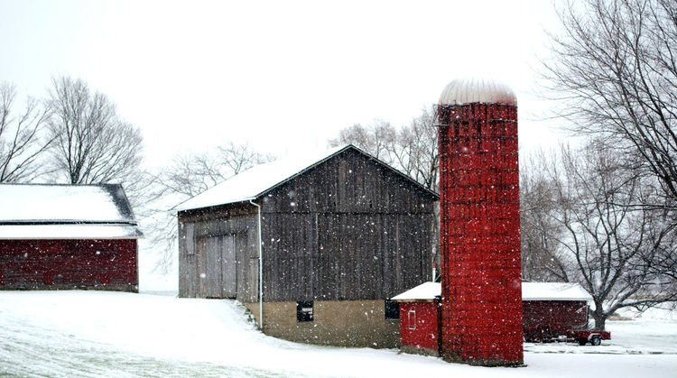 beautiful rustic barns stand out against a stark, snow covered landscape in Michigan USA Barns Beautiful Rustic Architecture Bare Tree Beauty In Nature Building Exterior Built Structure Cold Temperature Day Family Farm House Nature Outdoors Silo Sky Snow Snow Frosted Tree Weather Winter The Architect - 2018 EyeEm Awards