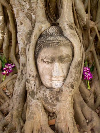 Buddha Buddha Head In Tree Roots, Wat Mahathat, Ayutthaya Nature Spirituality Thailand Tree Ayyuthaya Buddha Head Roots Roots Of Tree