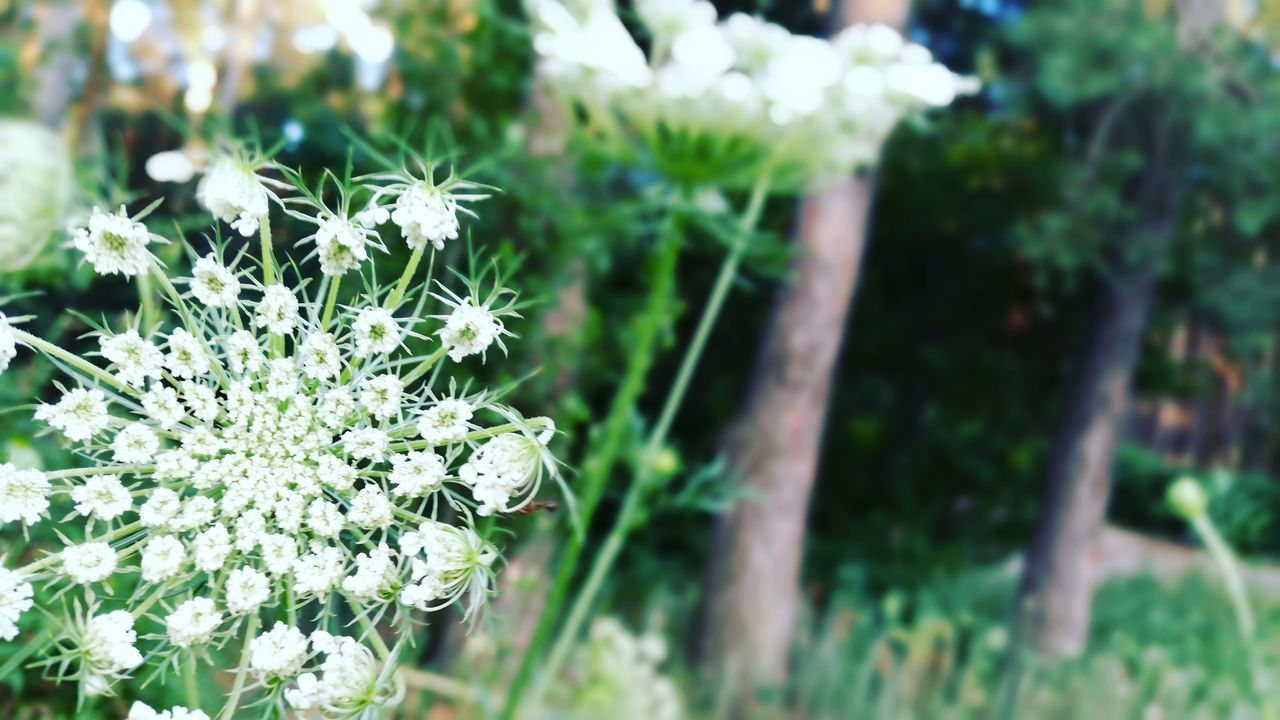 flower, nature, growth, plant, beauty in nature, fragility, no people, outdoors, day, freshness, close-up, flower head
