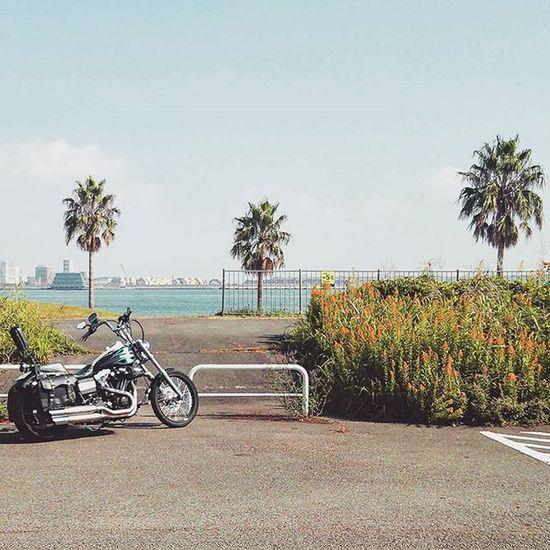 お出かけ日和 空気乾燥 空冷エンジン よく燃える 秋空 海 Niceday Outing Airdrying Autumnsky Harleydavidson Motorcycle