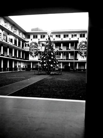 """My Year My View """"Star..."""" Outdoors Tree Christmas Christmastime Christmas Decoration Christmas Spirit Ue MNL Student Lovely Bnw Chill Foundations Middle Phil Excited Count Down 17 Taking Photos"""
