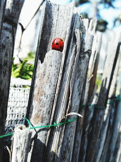 Spring Ladybug Nature Belgrade