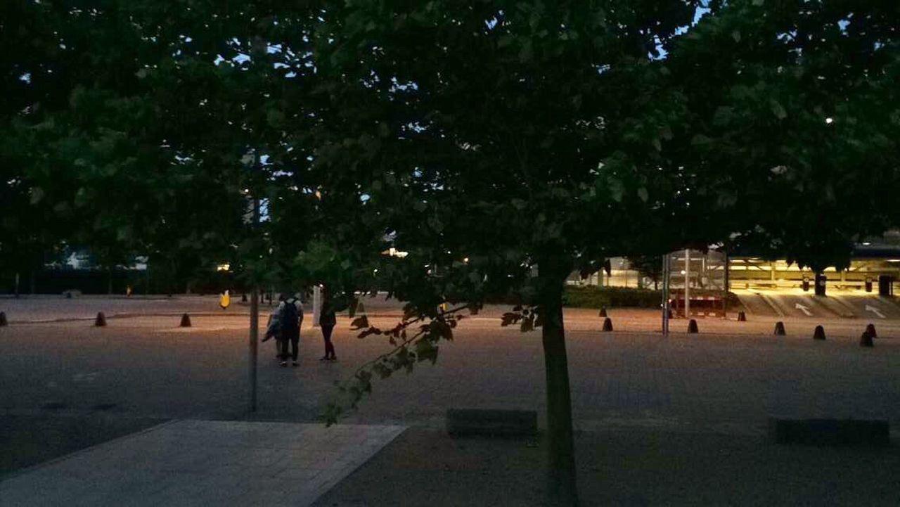 tree, night, outdoors, nature, people