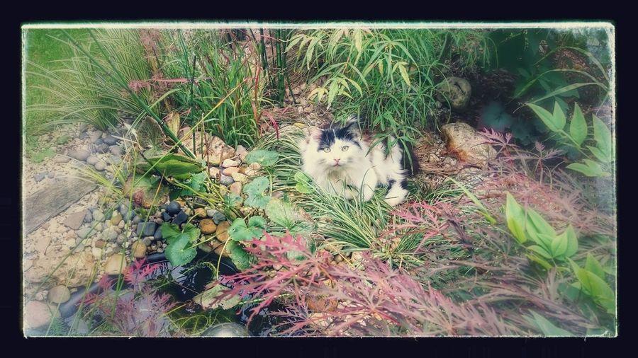 MiniMeow 💕 ×|× Cat Garden Green Nature