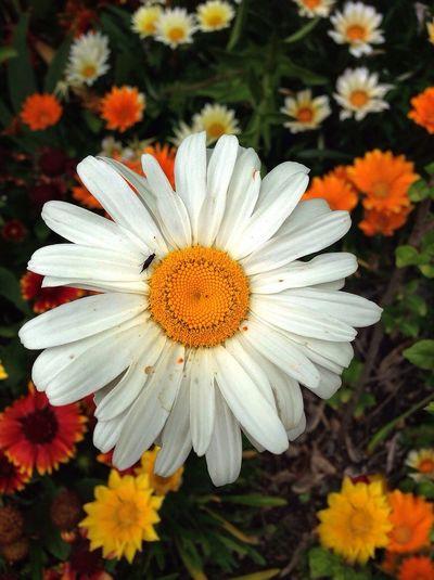 Eyembestshots Streamzoofamily Nature Flower