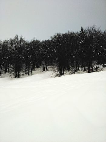 snow Silence White Black Love Snow Winter Cold Temperature Tree Snowing Pinaceae Nature EyeEmNewHere