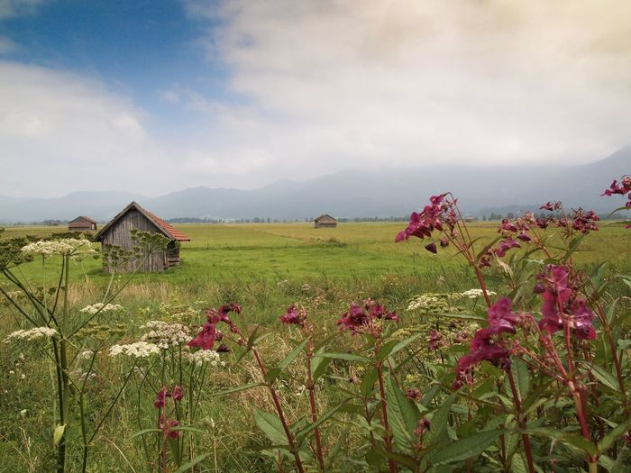 View of flowers and field against mountain range Flowers Betterlandscapes Bayern Blaues Land Plant Flower Flowering Plant Sky Beauty In Nature Cloud - Sky Growth Freshness Scenics - Nature Landscape Field Land Built Structure Growth Nature