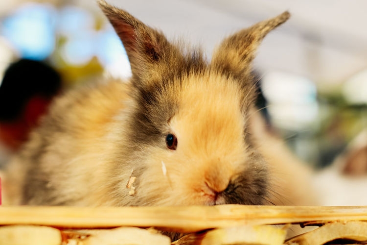 Close-up portrait of a rabbit