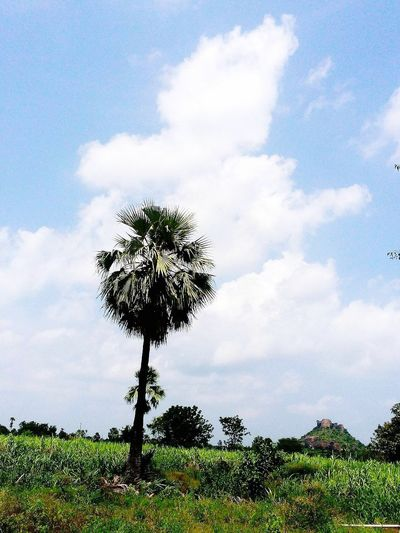 EyeEm Nature Lover Taking Photos At My Farm Happy Tuesdays! ❤ Cloud_collection  Cloud9 My Cloud Obsession☁️ Cloudporn Eye4photography  Smartphone Palm Tree Hanging Out Have A Nice Day♥ Love U All From India With Love...