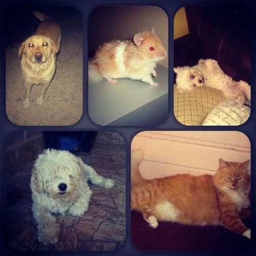 Mis bebes de la vida <3 Mascotas Bobito Tommy Gabriela Max Pelusa Misamores