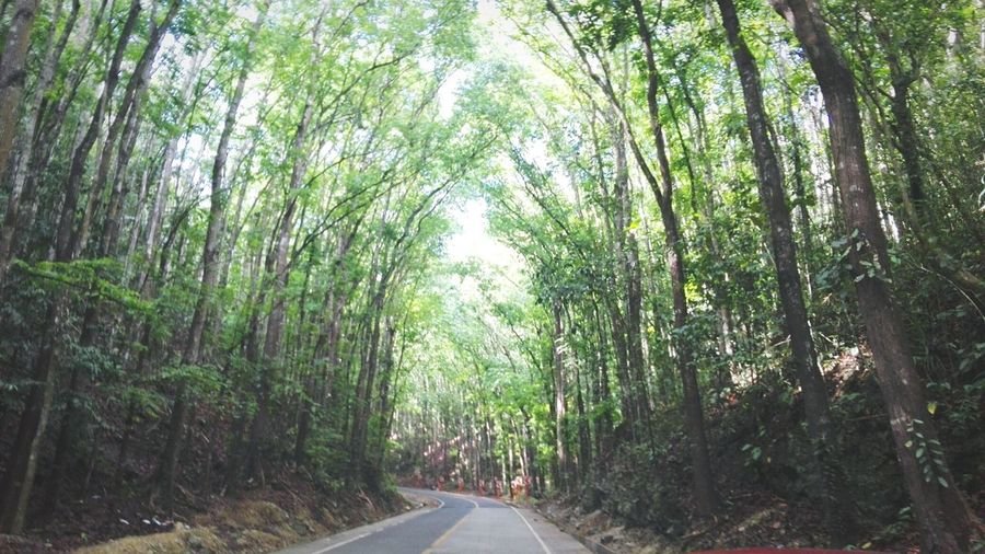 Hanging Out Roadtrip Road Forest Forest Photography Trees Trees And Sky Sky Nature Nature Photography Naturelovers Bohol Bohol Philippines Man Made Forrest Bohol First Eyeem Photo