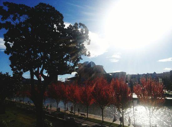 Autumn Autumn Colors Bilbao SPAIN Paisvasco Guggenheimmuseum Deusto Miles Away The City Light