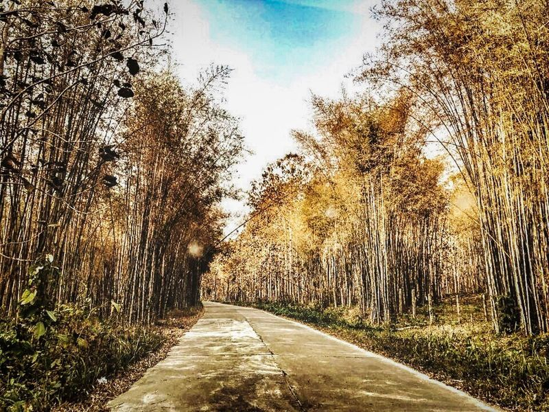 Riding to Bamboo trees 🦋🍂🍁 Dry Season Leaf Bamboo Forest Tree Plant Sky The Way Forward Direction Nature No People Road Footpath