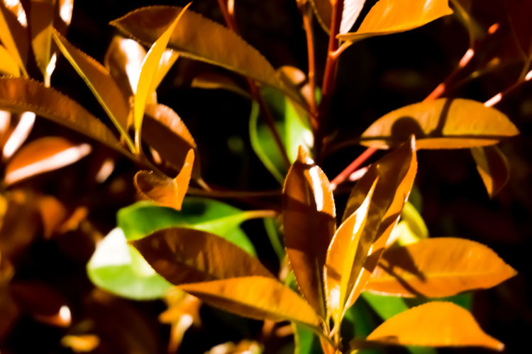 Leaves wallpaper Autumn Autumn Colors Backgrounds Beauty In Nature Black Background Brown Close-up Fall Flower Head Fragility Freshness Full Frame Green Color Growth Leaf Leaves Nature Night No People Outdoors Plant