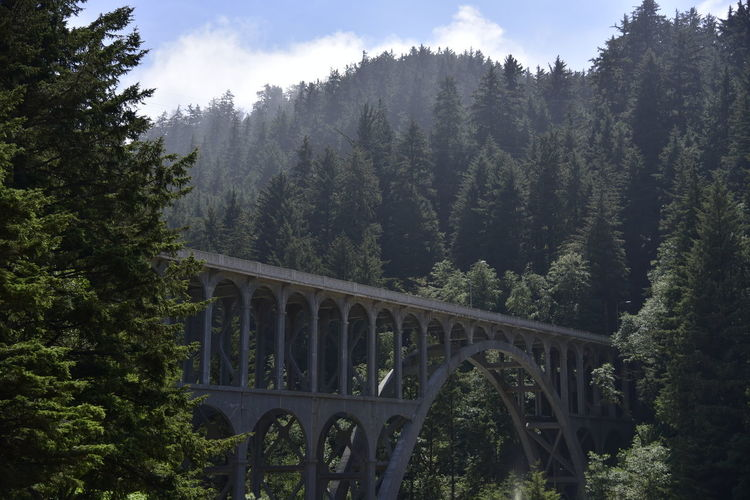 Oregon Architecture Bridge Bridge - Man Made Structure Connection Day Forest Growth Mountain Nature No People Oregon Coast Outdoors Sky Tree