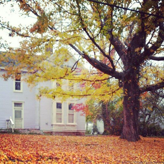 Happy Fall Yall... Autumn Season  Leaves House Instagram Instamood Insta_mazing Instadaily Instagood Instacanvas Picoftheday Photooftheday October