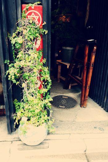 Furniture Nature Plant Plant Life