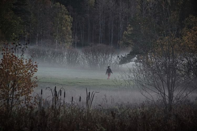 One Person Walking Autumn Collection Autumn Fog Niklas Storm Okt 2018 Tree Grass Foggy Mist Weather Fall Change A New Beginning