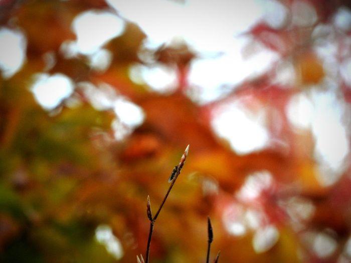 """Perspectives On Nature EyeEmNewHere Bacouël sur selle Autumn🍁🍁🍁 Rouge Automne🍁🍂🍃 Orange Color Orange Sky Insectesurbranche Naturepower Alone Beautiful """"La beauté réside dans la différence """" ☯️"""