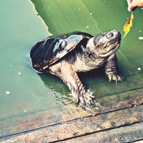 Nature Swimming Eating Michaelangelo
