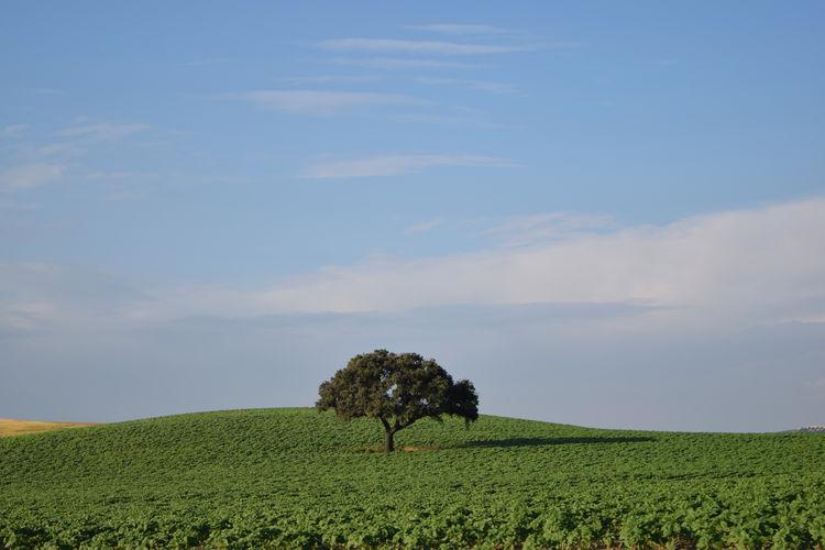 Single tree on field against sky