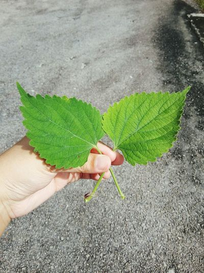 🍃😊 Beauty In Nature Outdoors Green Color Human Hand Leaf Plant Nature Photography