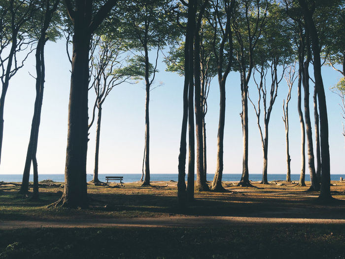 Trees growing at sea shore against clear sky