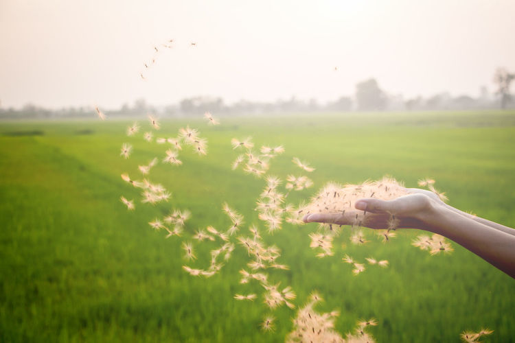 Blown Agriculture Beauty In Nature Bliss Blissful Blown Blown Away Farm Field Flower Flower Head Freshness Grass Grass Seeds Green Color Growth Human Body Part Human Hand Landscape Nature Outdoors Rural Scene Scenics Seeds Tranquility The Great Outdoors - 2018 EyeEm Awards The Creative - 2018 EyeEm Awards