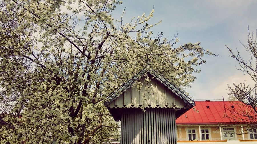Blooming tree Outdoors Built Structure No People Beauty In Nature Spring Has Come Blooming In Spring Blooming Trees Cherry Tree Flower Romanian Village Traditional Architecture Spring Landscape Granicesti, Suceava Fountain Traditional Fountain April 2017 Easter 2017