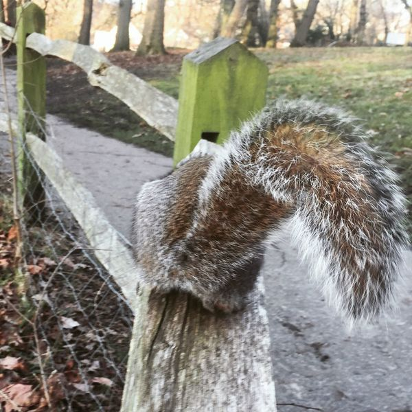 One Animal Park Parklife Day No People Outdoors Nature Close-up Animals In The Wild Squirrel Squirrel Tail