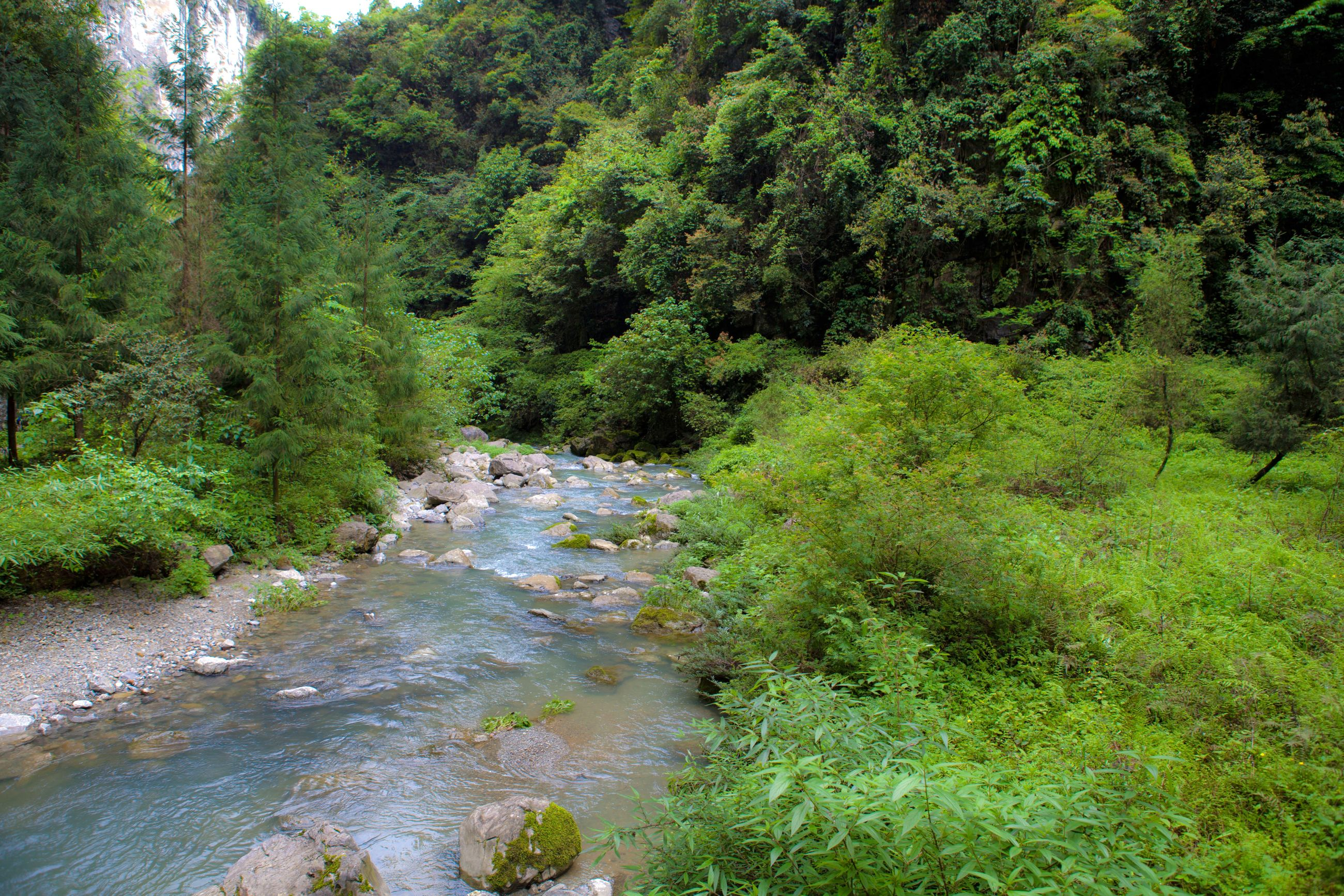 tree, water, forest, tranquil scene, stream, scenics, tranquility, river, green color, flowing, non-urban scene, nature, beauty in nature, flowing water, idyllic, growth, woodland, day, remote, outdoors, wilderness, wilderness area, vacations, tourism, no people, narrow, waterfront, solitude, lush foliage