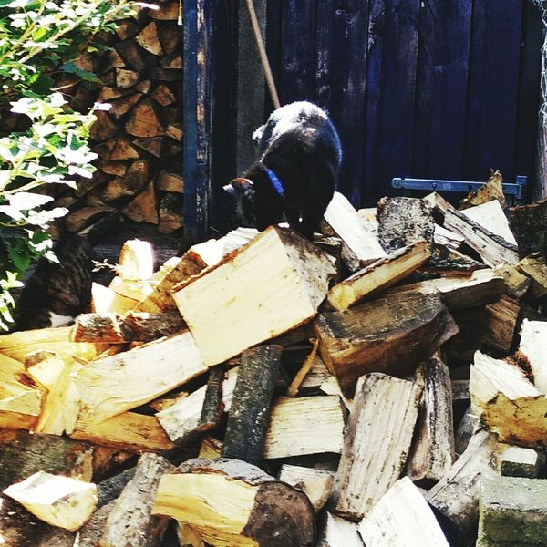 Inspecting the new hearthwood delivery. Hearthwood Logs Stacked Logs Cat Summer Ready For Winter Wood