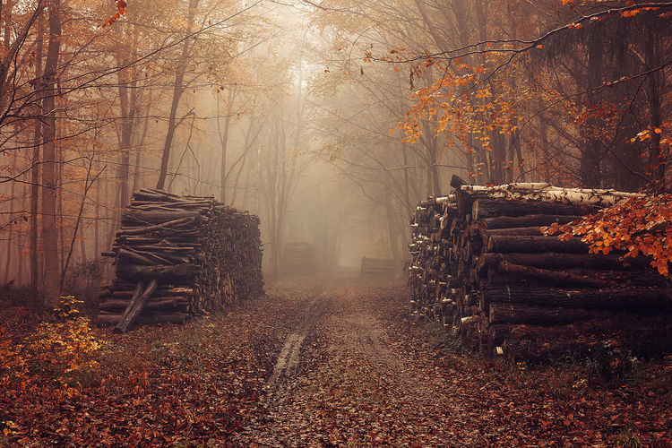 A pic taken during last autumn, in France #Wood #autumn #cute #fog #forest #leaves #path #red #sunset #sun #clouds #skylovers #sky #nature #beautifulinnature #naturalbeauty #photography #landscape #woods