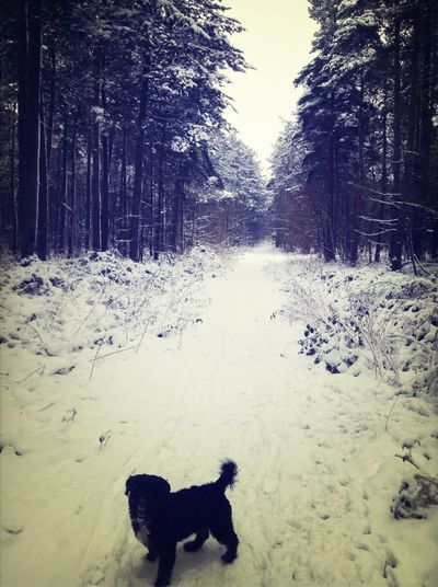 Snow Walks