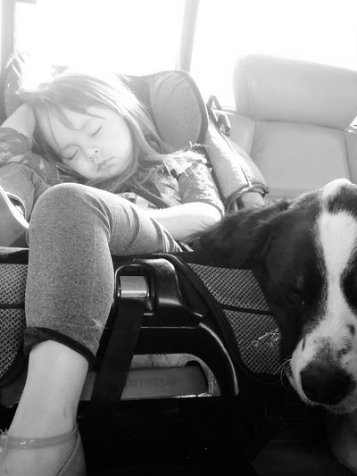 Dog Car Pets One Person Day Transportation Child Sitting Animal Themes Black And White Friday