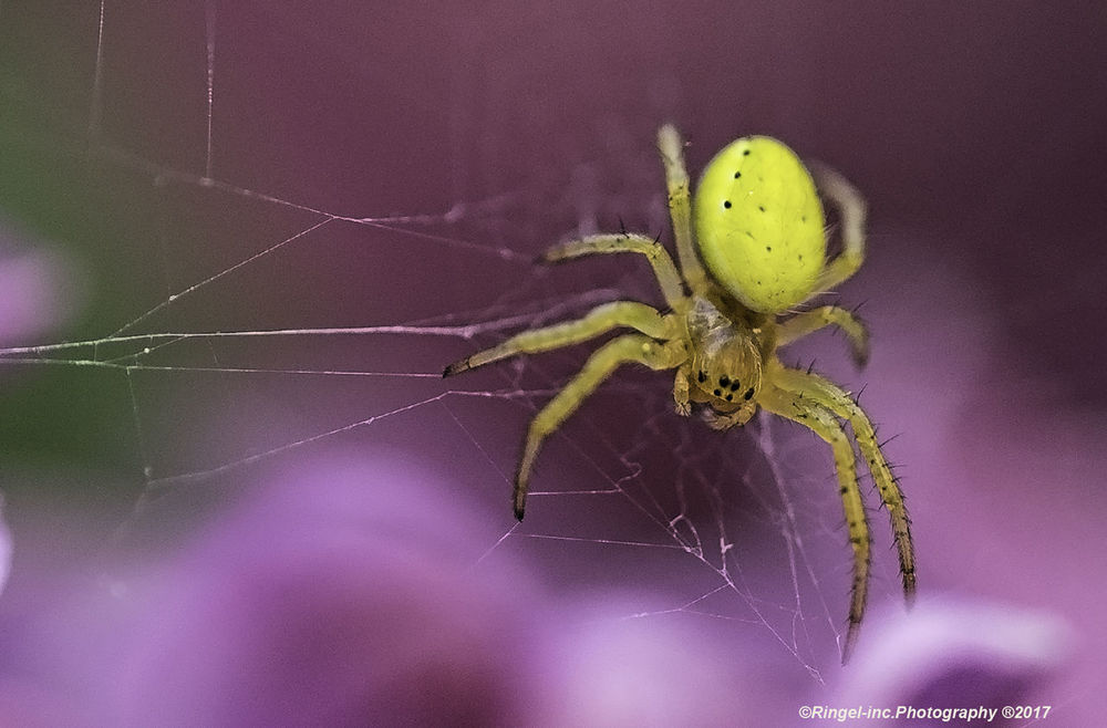 Tiny little spider in the garden. Spider One Animal Spider Web Animal Wildlife Animal Themes Insect Close-up Animal Leg Animals In The Wild Focus On Foreground No People Fragility Indoors  Day Nature Hanging Out Fooling Around ^_^ Getting Inspired Hello World Animals Posing Spider Macro