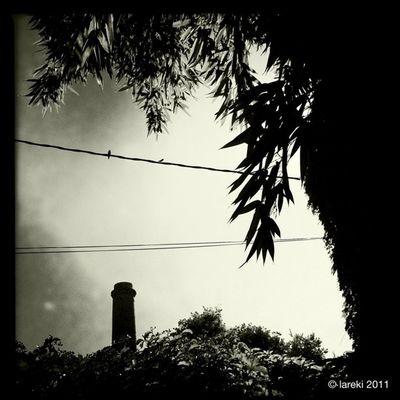 Dues orenetes i xemeneia - Dos golondrinas y chimenea - Two swallows and chimney Paradise Lareki Saifores Lareki100likes