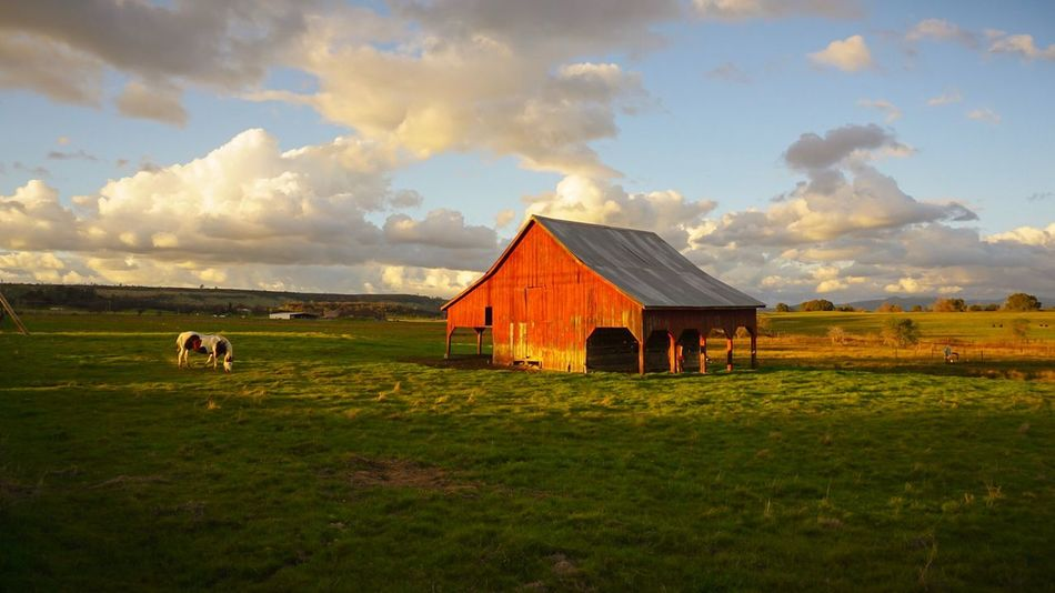Tranquil Relaxing Roadtrip Sunset Horses Horse Barn Sky Cloud - Sky Animal Themes Domestic Animals Grass Field Mammal No People Nature Grazing Day Farm Animal Outdoors Scenics Livestock Landscape