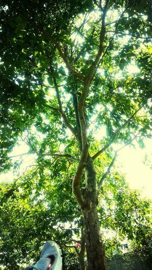 Verde, verde, Guatemala, verde! Relaxing Enjoying Life Noviembre Green