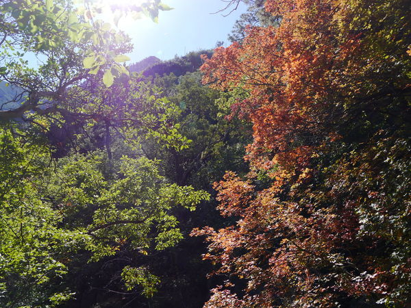Autumm Autumm Leaves  Beauty In Nature Branch Day Fall Beauty Fall Colors Fall Leaves Freshness Growth Guadalupe Mountains Guadalupe Mountains National Park Leaf Low Angle View Nature No People Outdoors Scenics Sky Texas Tranquility Tree Turning Leaves