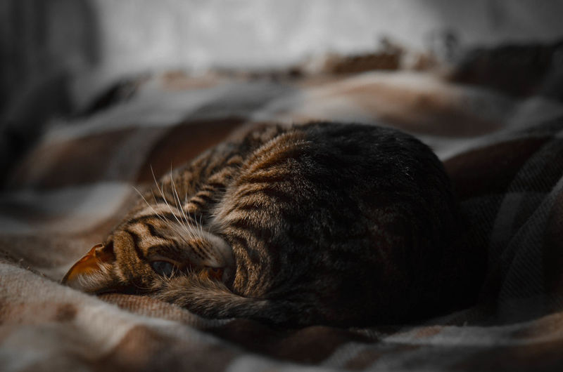 Animal Themes Bed Close-up Comfortable Day Domestic Animals Domestic Cat Feline Indoors  Lying Down Mammal Nature No People One Animal Pets Relaxation Resting Sleeping