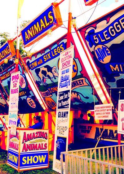 Animals Colorful Colors Of Carnival Fair Multi Colored Rare Text Unusual