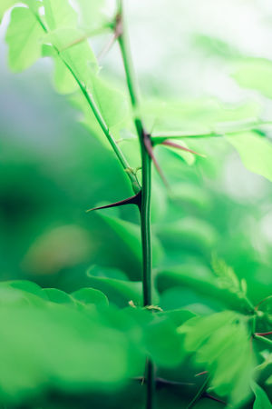 Beauty In Nature Close-up Day Focus On Foreground Fragility Freshness Green Green Color Growth Invertebrate Leaf Nature No People Outdoors Plant Plant Part Plant Stem Selective Focus Tranquility Vulnerability