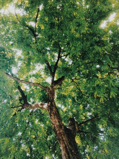 Tree Nature Nature Photography Green Life