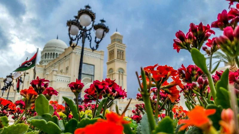 Tripoli Photography Flowers Taking Photos Check This Out Hello World Libyan
