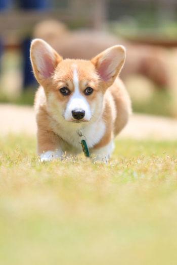 Portrait of puppy sitting on field