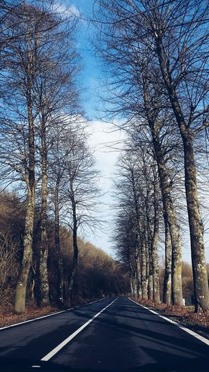 Street Streetphotography Blue Sky Trees Winter Winter Trees Winter Street Roadtrip Road Travel Photography Travel Instagram Italy Sponsor Nikon Photo Colour Of Life Color Palette Travel Destinations