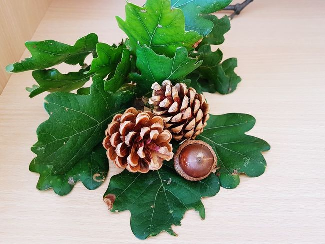 Autumn photo Inside Photography Brown Color EyeEm Selects Leaf Table Close-up Green Color Pine Cone