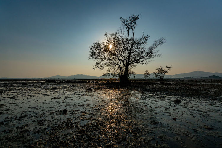 Sky Tranquility Tranquil Scene Beauty In Nature Tree Scenics - Nature Clear Sky Land Nature Non-urban Scene No People Landscape Environment Bare Tree Plant Sunset Remote Solitude Water Outdoors Isolated